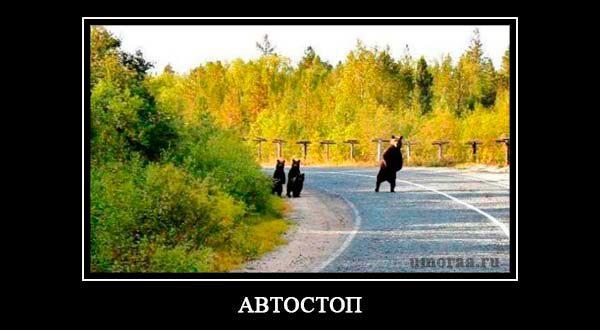 демотиватор с медведями на дороге