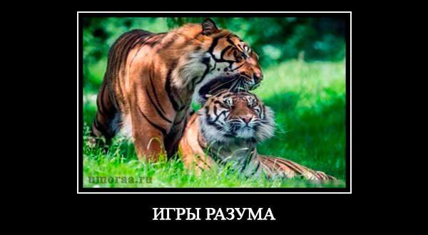 демотиватор с тиграми