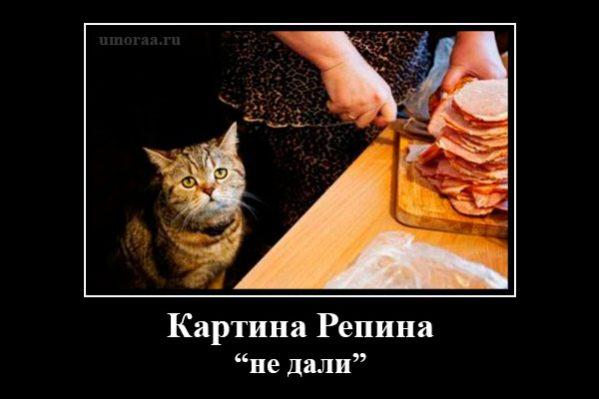 демотиватор с котом на кухне