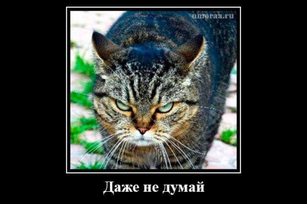 демотиватор с взглядом кота, который говорит сам за себя