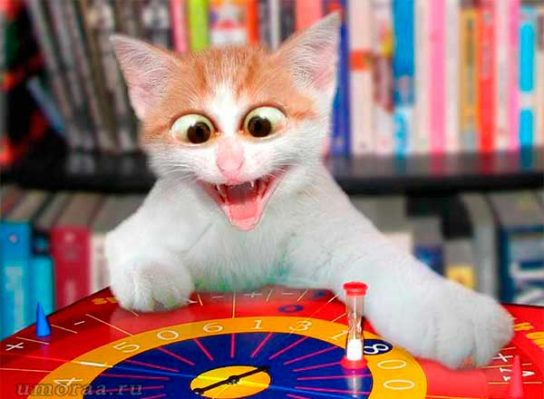кот играет в рулетку