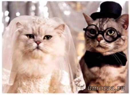 Милашки супруги
